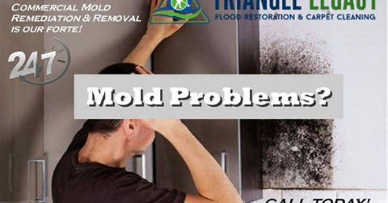 Mold Remediation Washington DC